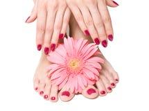 Manicura y pedicure rosados con una flor Imagen de archivo