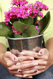 Manicure. Hands with manicure holding flowers Stock Photos