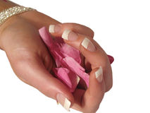 Manicure. D fingers holding rose petals isolated on white stock image