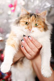 Manicure Fotografia de Stock Royalty Free