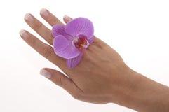 manicure zdjęcia stock