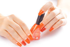 Manicure. applying red nail polish. isolated Royalty Free Stock Image