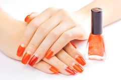 Manicure. applying red nail polish. isolated Royalty Free Stock Photography