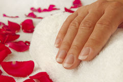 Manicure in a beauty salon - woman palms ready for treatment. Manicure in a beauty salon - woman palms lying on towel among rose petals, ready for treatment Stock Photo