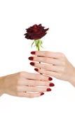 manicure czerwień wzrastał Obraz Royalty Free
