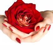 manicure czerwień wzrastał zdjęcia stock