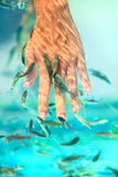 Manicure fish spa. Beauty treatmant. Hand and finger skin care treatmant in water with the fish rufa garra, also called doctor fish, nibble fish and kangal fish Royalty Free Stock Image