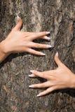 Manicure francês em um fundo de um bark-3 Fotos de Stock Royalty Free