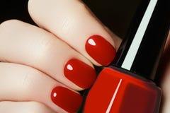 manicure Härliga den manicured kvinnans händer med rött spikar polermedel Fotografering för Bildbyråer
