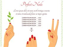 Manicure hands vector template Stock Photo