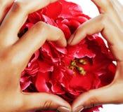 Manicure las manos concepto, fingeres de la gente de la pedicura de la mujer en la forma del corazón que sostiene las flores de l foto de archivo libre de regalías