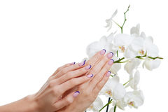 Manicure and orchid Stock Image