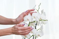 Manicure and orchid Royalty Free Stock Photos