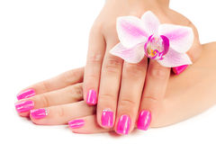 Manicure with orchid flower. isolated stock images