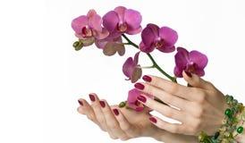 Manicure, orchidea e branelli Fotografie Stock Libere da Diritti