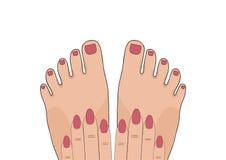 manicure pedicure бобра также вектор иллюстрации притяжки corel иллюстрация вектора