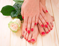 Manicure and pedicure. With white flower. rose royalty free stock photo