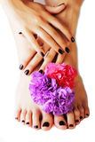 Manicure pedicure with flower close up isolated on white perfect shape hands spa salon, modern dark mani pedi. Concept Stock Photos