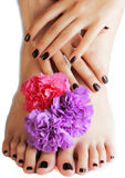 Manicure pedicure with flower close up isolated on white perfect shape hands spa salon, modern dark mani pedi Royalty Free Stock Photo