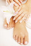 Manicure pedicure with flower lily close up isolated on white perfect shape hands spa salon Stock Photo