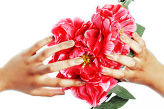 Manicure pedicure people hands concept, woman fingers in shape of heart holding pink rose flowers Stock Photos
