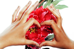 Manicure pedicure people hands concept, woman fingers in shape of heart holding pink rose flowers Stock Images