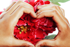 Manicure pedicure people hands concept, woman fingers in shape of heart holding pink rose flowers Stock Photography