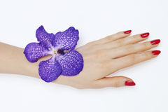 Manicure and purple orchid Royalty Free Stock Image