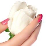 Manicure, ręki & zdrój, Piękne kobiet ręki, miękka skóra, beautif Zdjęcie Royalty Free