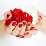 Manicure with red and white carnations Royalty Free Stock Image