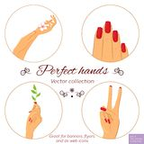 Manicure and skincare concept. Set of hands. Nail and hand care illustration set. Elegant female hands with different nail polish. Manicure icon set. Vector Stock Photography
