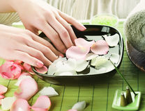 Manicure.Spa. Beautiful Woman Hands with rose petals.Manicure or Spa concept
