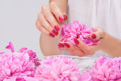 Manicure spa pampering with delicate flower Royalty Free Stock Photography