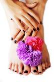 Manicure'u pedicure z kwiatu zakończeniem up odizolowywającym na białym perfect kształcie wręcza zdroju salon, nowożytny ciemny M zdjęcia stock