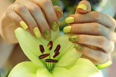 Manicure with yellow lacquer on beautiful well-groomed female hands, a lily flower close-up in gentle female hands, gel Stock Image