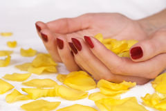 Manicure and yellow rose petals Stock Image