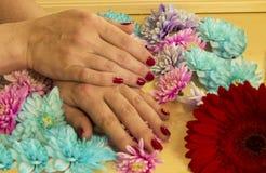 Manicure z Burgundy gel lakierem obrazy royalty free