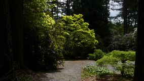 Asain garden with a gravel path wraping around a pond filled with green duckweed. Manicured asain garden with a gravel path wraping around a pond filled with stock video