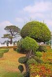 Manicured garden shrub Stock Photo