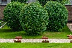 Manicured garden trees Stock Image