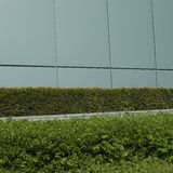 Manicured green hedge. Growing next to a modern wall Stock Image
