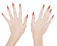 Manicured hands Royalty Free Stock Photo