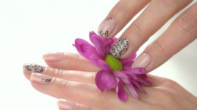 Manicured hands and chrysanthemum, slow motion. Well-groomed hands of young woman with beautiful nude manicure gently caress little pink flower close up stock video footage