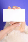 Manicured hands in fur coat holding blank business. Card on a blue background Royalty Free Stock Photography