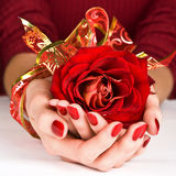 Manicured hands and golden ribbon holding red rose Royalty Free Stock Photos