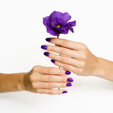 Manicured hands holding flower. Beautiful woman hands with manicure holding purple flower Royalty Free Stock Image