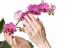 Manicured hands touching orchid Royalty Free Stock Photography