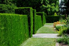 Manicured Hedge. A long,straight hedge in a botanical garden Royalty Free Stock Photography
