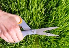 Manicured Lawn arkivfoto