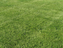 Manicured lawn. Beautiful green lawn freshly mowed Royalty Free Stock Images